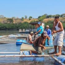 e las 13 cooperativas, 8 innovaron en producción pesquera al adoptar nuevas alternativas de cultivo con el uso de jaulas.