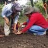 Método biointensivo de producción de alimentos: innovación y enfoque territorial para la seguridad alimentaria