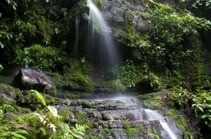 Pie de foto: El Refugio de Vida Silvestre de El Chocoyero abastece de agua potable a las comunidades aledañas (fotografía: AECID).